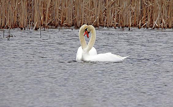 Debbie Oppermann - Swan Love