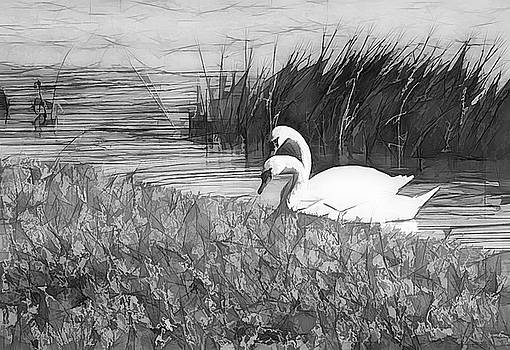 Swan Pair BW Abstract by Rosalie Scanlon