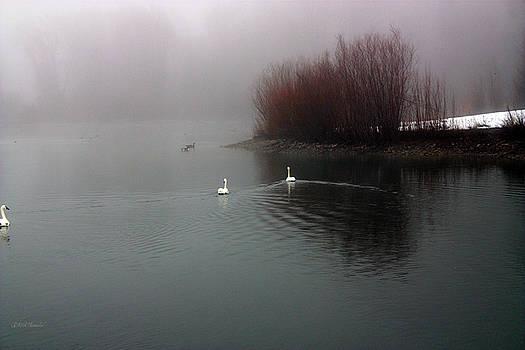 Swan Pond by Rick Thiemke