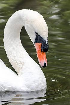 Gaurav Singh - Swan Profile