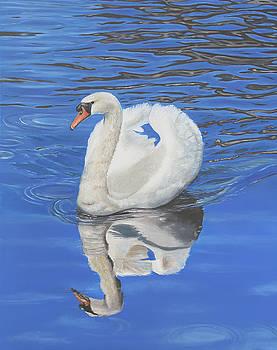 Swan Reflection by Elizabeth Lock