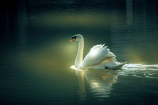 Swan by Bren Ryan
