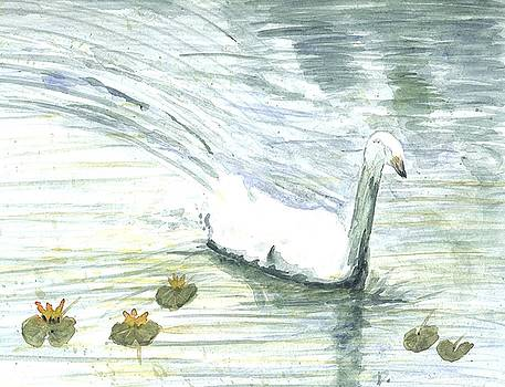 Swan swimming by Darren Cannell