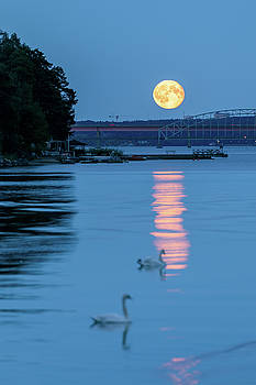 Swans and the Moonrise in Stockholm by Dejan Kostic