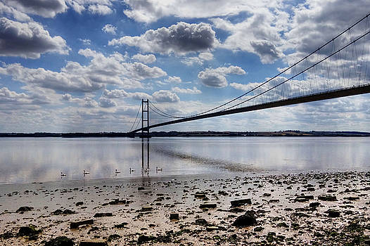 Swans at Humber Bridge by Sarah Couzens