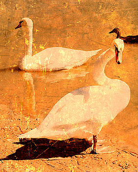 Swans at Pond by Kori Creswell