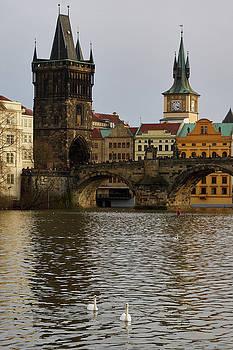 Swans By the Vltava. Prague spring 2017 by Jouko Lehto