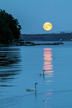 Swans Gliding into the Moonlight during a Moonrise in Stockholm by Dejan Kostic