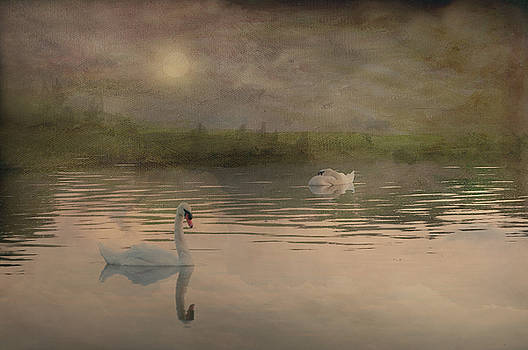 Swans morning by Carolyn Dalessandro
