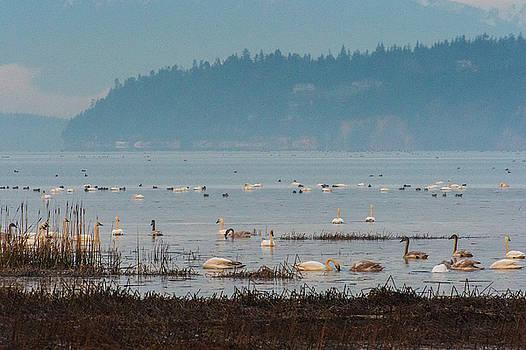 Swans on the Sea by Hisao Mogi