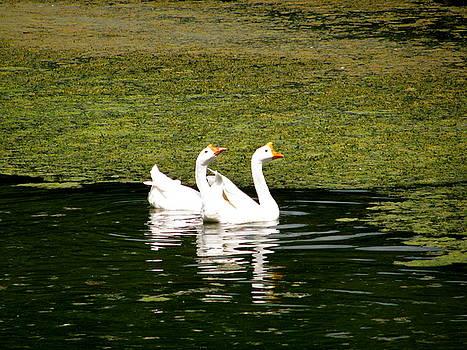 Sherri Williams - Swans