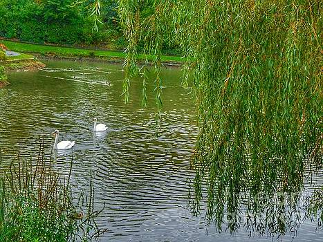 Swans Under The Willow Tree by Joan-Violet Stretch