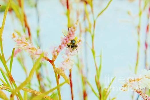 Sweet Bees by Keri West