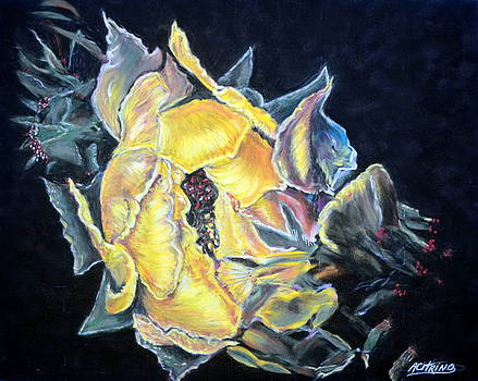 Sweet Desert Rose   Pastel by Antonia Citrino