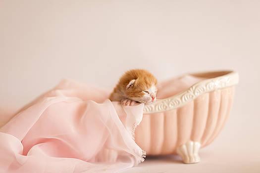 Sweet Dreams by Andrea Borden