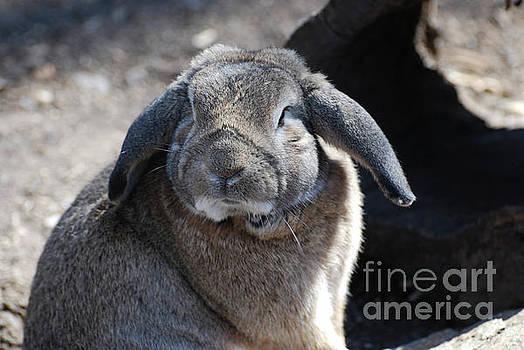 Sweet Faced Lop-Eared Rabbit by DejaVu Designs