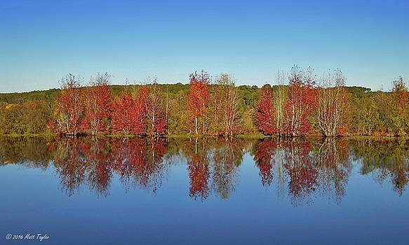 Sweet Gum Reflections by Matt Taylor