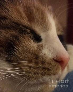 Sweet Kitten by Donato Iannuzzi
