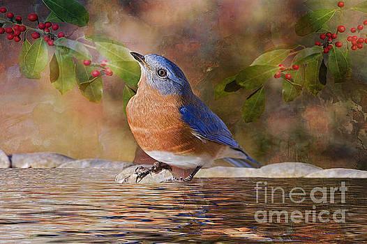 Sweet Little Bluebird  by Bonnie Barry