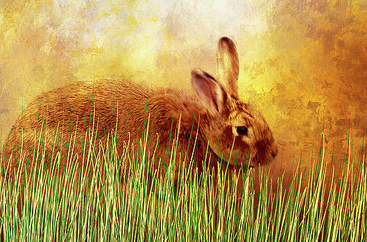 Sweet Little Bunny Face by Diane Schuster