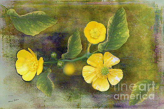 Sweet Little Buttercups by Nina Silver