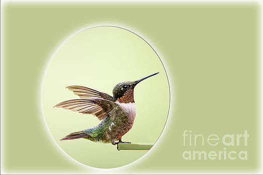 Sweet Little Hummingbird by Bonnie Barry