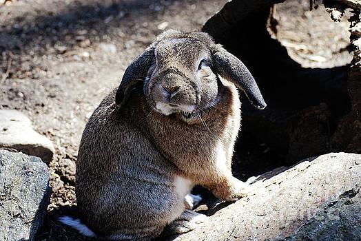 Sweet Lop Eared Rabbit in the Wild by DejaVu Designs