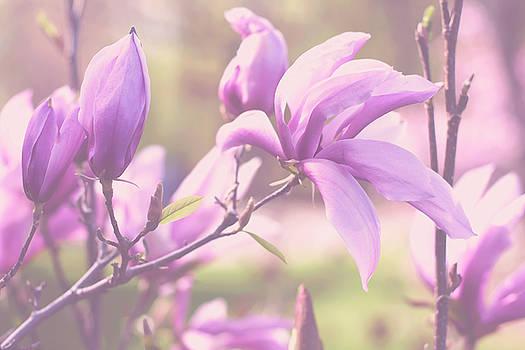 Sweet Magnolia by Angela King-Jones