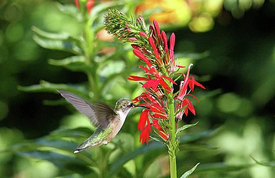 Debbie Oppermann - Sweet Nectar