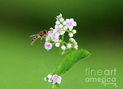 Sweet Nectar by Mariarosa Rockefeller
