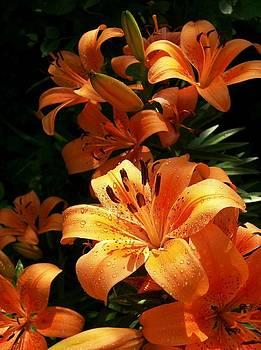Sweet Orange by Jim  Darnall