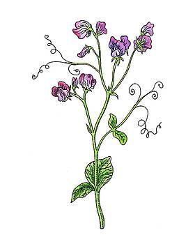 Sweet Pea Flower Botanical Watercolor by Irina Sztukowski