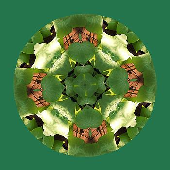 Sweet Potato Mandala 2 by Keri Renee
