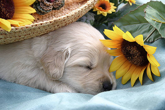 Sweet Puppy Dreams by Kelly S Andrews
