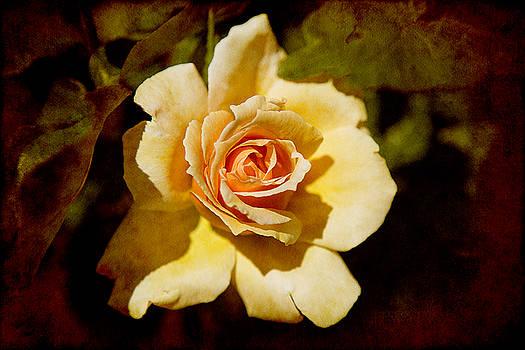 Milena Ilieva - Sweet Rose