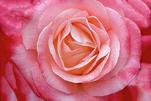 Sweet Rose by Vanessa Thomas