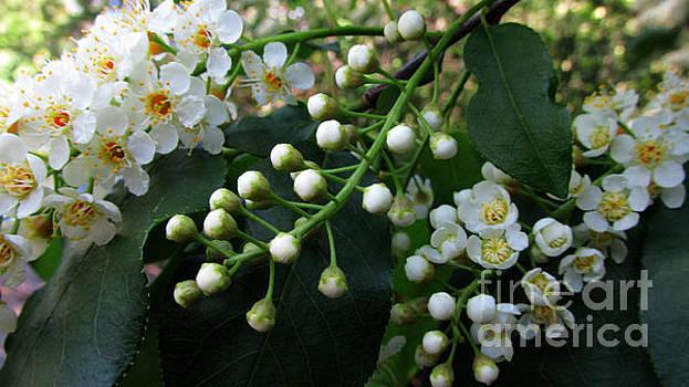 Sweet Spring by Janice Westerberg