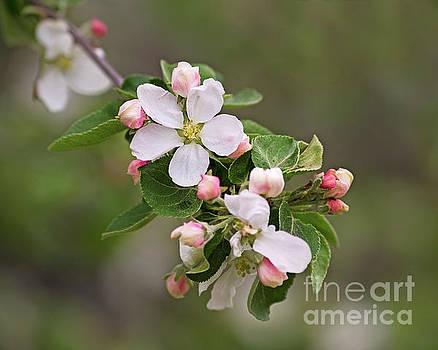 Sweet Spring by Nina Stavlund