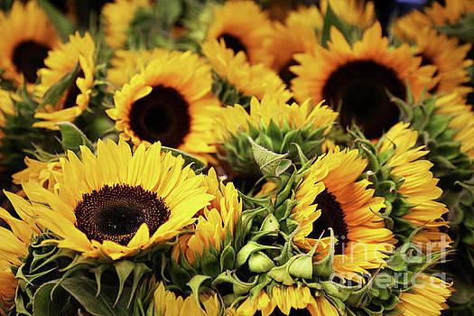 Sweet Sunflowers by Kathy Eastmond