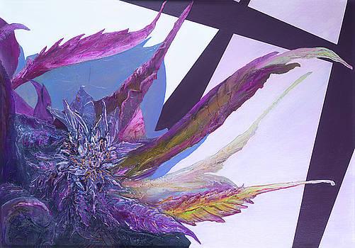 Cannabis sativa, Sweet tarts by Alyssa Serpentini