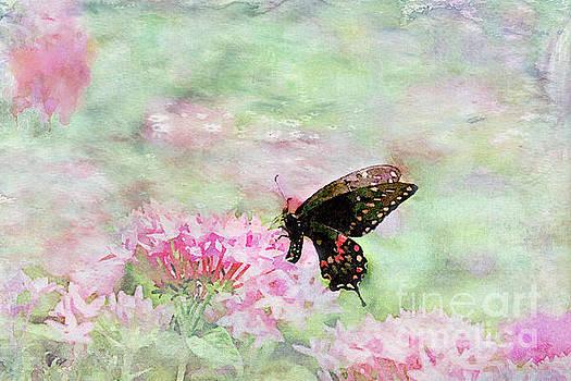 Sweetness by Betty LaRue