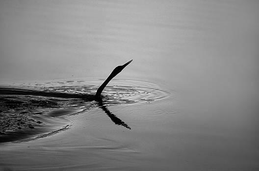 Swim by TJ Drysdale