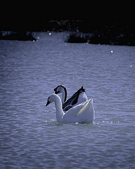 Swim Together by Philip A Swiderski Jr