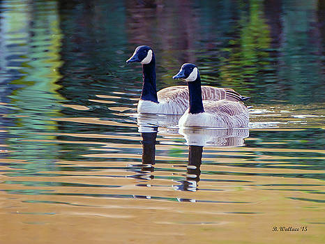 Swimming Neck To Neck by Brian Wallace
