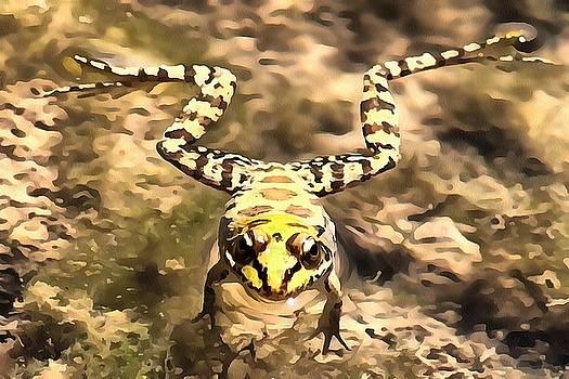 Tracey Harrington-Simpson - Swimming Frog