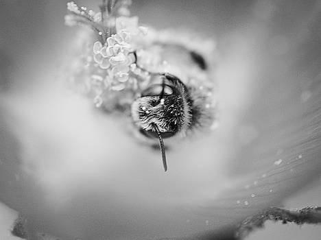 Swimming in Sweetness by Philip A Swiderski Jr