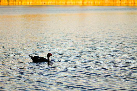 Swimming by Mandy Wiltse