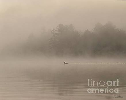 Swimming Through the Fog on Woodbury Pond by Jan Mulherin