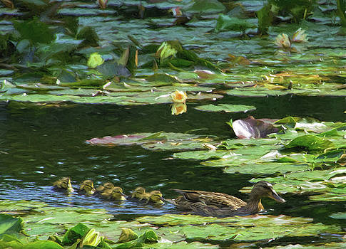 Swimming through the Waterlillies by Helen Worley