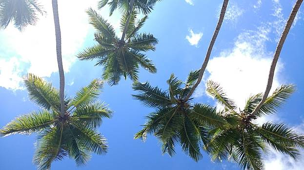 Swinging Coconut Trees by Sheryl Chapman Photography